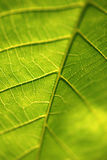 Fin verte de lame vers le haut d'instruction-macro Photo libre de droits