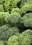 Fin verte végétale de chou frisé vers le haut photos stock