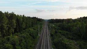 Fina biofilmer flyger över tvåvägsnät i skogen med många träd stock video