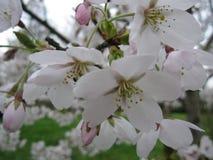 fina blommor Royaltyfri Bild