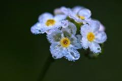 fina blommor Arkivfoton