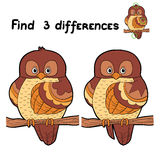 Fina differences (owl) Royalty Free Stock Photography