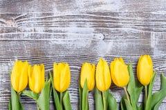 Fina Tulip Flowers Arkivfoton