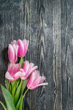 Fina Tulip Flowers Royaltyfri Foto