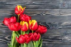 Fina Tulip Flowers Fotografering för Bildbyråer