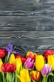 Fina Tulip Flowers Arkivbilder