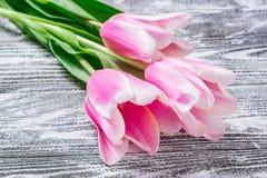 Fina Tulip Flowers Royaltyfri Bild