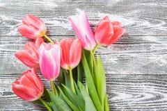 Fina Tulip Flowers Arkivfoto