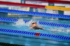 15. FINA-WELTmeisterschaften Barcelona 2013 lizenzfreie stockfotografie