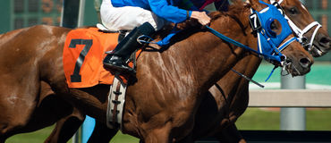 Final de Rider Jockey Race Line Photo de siete caballos Fotografía de archivo