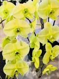 Final verde da flor Imagem de Stock