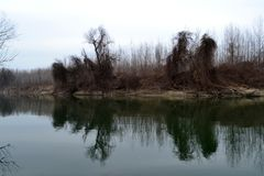 A finales de enero en el Danubio 2 foto de archivo