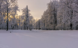 Finales del día de invierno Fotos de archivo libres de regalías