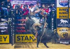 Finales du monde d'équitation de taureau de PBR Images stock
