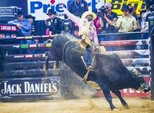 Finali del mondo di guida del toro di PBR immagine stock libera da diritti
