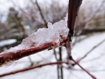 The brown stem under rain drops and snow Stock Image