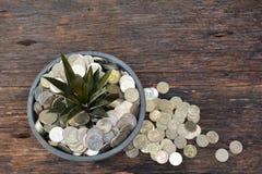 Finança, sucesso, crescimento, moeda da pilha e potenciômetro de flor postos sobre a casca Imagens de Stock Royalty Free