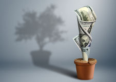 Finance growth creative concept, money as tree in pot Royalty Free Stock Photos