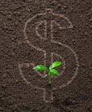 Financial concept money growing Stock Photo