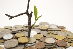 Financial growth. Conceptual image. Coins and plant, isolated on white background Stock Photos