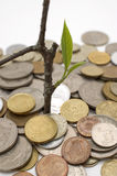 Financial growth. Conceptual image. Coins and plant, isolated on white background Royalty Free Stock Photo