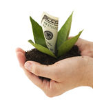 Financial Growth Royalty Free Stock Photo