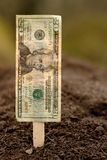 Financial Planting. American twenty dollar bill attached to a seed stake and placed in the earth Stock Photography