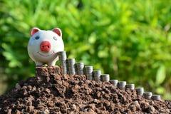 Financie moedas e mealheiro da pilha no fundo da natureza Foto de Stock