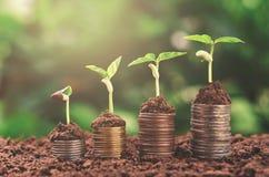 Finans för affär för begrepp för växtpengar växande royaltyfri fotografi