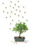 finansiell fallfrukt arkivbilder