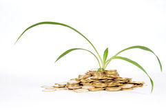 finansiell gödningsmedel royaltyfri bild