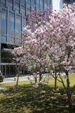 Finansiell gatabyggnad och magnolia Royaltyfri Fotografi