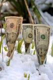 finansiell tillväxtfjäder Arkivfoton