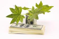 finansiell yield Royaltyfri Fotografi