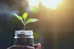 finanzas del concepto y salida del sol de ahorro del dinero que considera foto de archivo libre de regalías