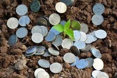 Finanzi le monete della pila intorno alla pianta verde sul fondo della natura e del suolo Fotografia Stock Libera da Diritti