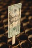 Finanzpflanzen Stockfoto