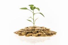 Finanzwachstum Stockbild