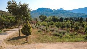 Finca em Mallorca Fotos de Stock