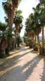 Finca in Mallorca. Typical finca with trees and big garden just outside Alcudia in Mallorca stock photos