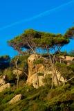 Fincain Mallorca Stock Photo