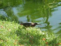 Finch με τα ψάρια Στοκ Φωτογραφίες