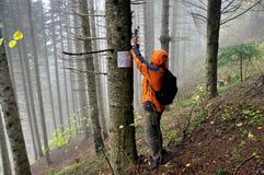 FINCH ΜΚΟ οι αντιπρόσωποι θέτουν και ελέγχουν ότι οι ειδικές κάμερες πήραν τα σπάνια βαλκανικά λυγξ εικόνων πολύ στοκ εικόνες