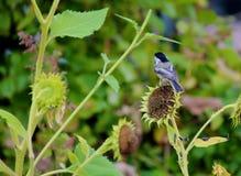 Finch πουλί στοκ φωτογραφία