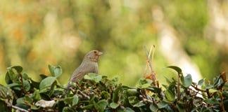 Finch πουλί στοκ φωτογραφίες
