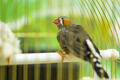 Finch πουλί στοκ εικόνα