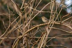 Finch σε ένα δέντρο στοκ φωτογραφία με δικαίωμα ελεύθερης χρήσης