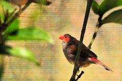 Finch Bird In a Tree Stock Photo