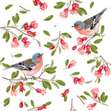Finch branch pattern Royalty Free Stock Images