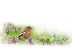 Finch of bright spring flowers isolated on white Royalty Free Stock Images